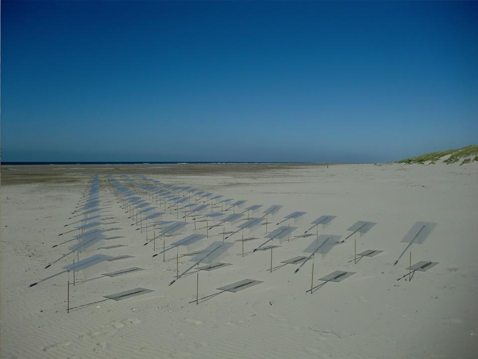 Windveld